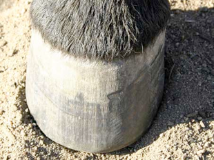 Oregon School Of Natural Hoof Care
